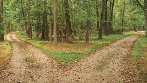 Two roads diverge in forest